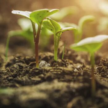 Miscugli e sementi